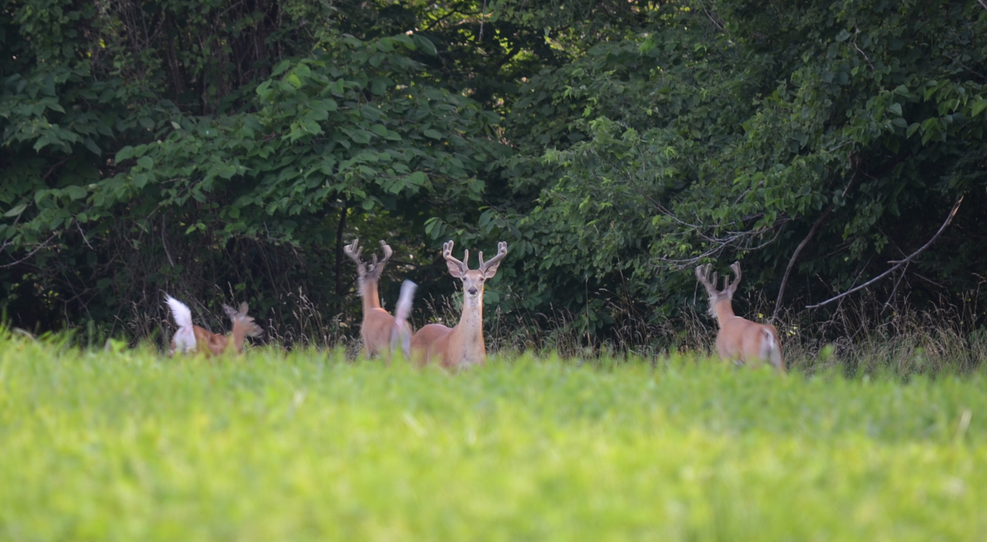 Don't Wait To Find Your Next Deer Hunting Property